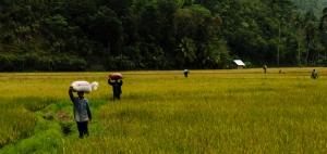 Bohol  (39 of 32)